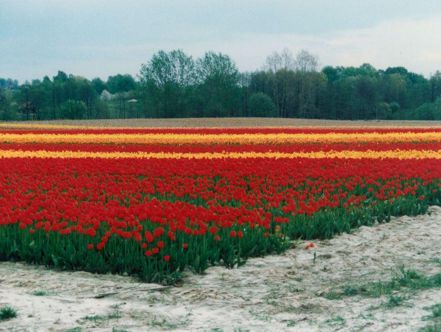 Viajes de prensa agroalimentaria a Polonia