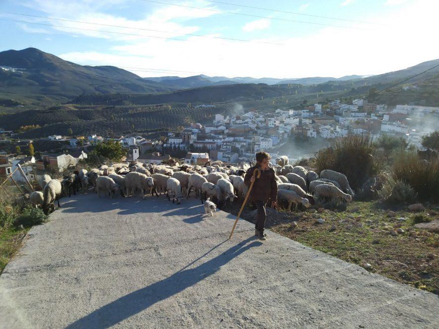 """El MAPA convoca el premio """"Excelencia a la comunicación"""" dentro sus reconocimientos a la mujer rural"""